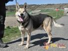 RAPUŚ-wspaniały, miły, pogodny, niewidomy psiak szuka dobreg - 8
