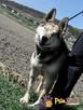 RAPUŚ-wspaniały, miły, pogodny, niewidomy psiak szuka dobreg - 10