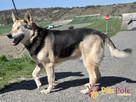 RAPUŚ-wspaniały, miły, pogodny, niewidomy psiak szuka dobreg - 7