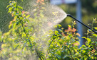 Opryski ogrodów, przycinanie tui, usługi ogrodnicze