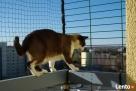 Siatka zabezpieczająca balkon , okno dla kota Warszawa