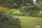 Sunny Garden- zakładanie, pielęgnacja, projektowanie ogrodów Zielona Góra