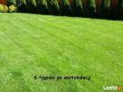 Zakładanie trawnika,niwelacja terenu ,rownanie działki - 2