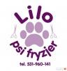 Lilo-Psi-Fryzjer - ul. Jórskiego 22 - Targówek - 3