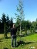 Duże drzewa ozdobne 14 cm - 1