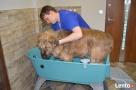 Psi Fryzjer salon groomerski pielęgnacja psów Łaziska Górne
