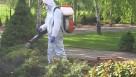 Zwalczanie komarów i kleszczy odkomarzanie Dezynsekcja