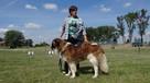 moskiewski pies stróżujący bernardyn kaukaz owczarek - 5