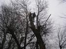 Wycinka drzew trudnych. Oraz ciecie i rabanie drewna - 4