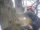 Wycinka drzew trudnych. Oraz ciecie i rabanie drewna - 1