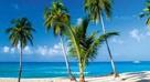 Antyle - rafy koralowe, palmy kokosowe - 1