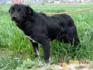 NEWSIK-malutki, grzeczny,spokojny młody psiak o uroczych oczk - 2