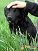 NEWSIK-malutki, grzeczny,spokojny młody psiak o uroczych oczk - 4