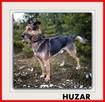 HUZAR, czujny,przyjazny szczepiony pies mix owczarek. - 4