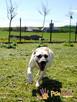 BRAJANEK-super fajny, wesoły,pogodny młody psiak-szukamy domu - 1