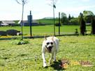 BRAJANEK-super fajny, wesoły,pogodny młody psiak-szukamy domu - 4