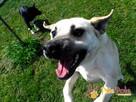 BRAJANEK-super fajny, wesoły,pogodny młody psiak-szukamy domu - 6