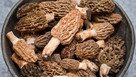Świeże grzyby Smardz jadalny (Morchella) 1 kg.