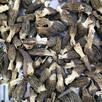 GRZYBY SUSZONE Morchella conica (Smardz Stożkowaty)1 kg - 3