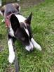KARO - psiak uratowany z lasu szuka najlepszego Domu! - 4