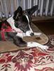 KARO - psiak uratowany z lasu szuka najlepszego Domu! - 7