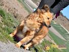 KELWINEK-wspaniały, przemiły,kochany kudłaty psiak-5 lat-ADOP - 4