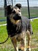 SZMARAGD-wspaniały psiak-szlachetny jak kamień-super przyjac - 5