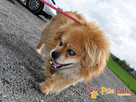 MONSTEREK-kochany kudłacz-uwielbia ludzi, bardzo lubi przytu - 6