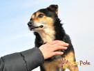 TRAFCIU-nieduży, b.uroczy psiak o wyjątkowym psim spojrzeniu - 2