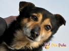 TRAFCIU-nieduży, b.uroczy psiak o wyjątkowym psim spojrzeniu - 8