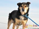 TRAFCIU-nieduży, b.uroczy psiak o wyjątkowym psim spojrzeniu - 1