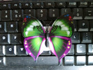 Motylki dekoracyjne