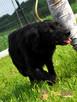 KLESZKA-piękna, miła, kochana, spokojna sunia-4-5 lat-adopcja - 5
