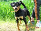 REXONEK-prześliczny, kochany, piękny wesoły psiak-szukamyDOMU - 2