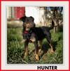 HUNTER, jagdterier mix, średni,przyjazny pies ,nieśmiały - 1