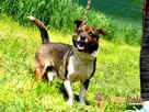 ŁACIAK-prze-fajny, wesoły, radosny, pogodny mały psiak-adopc - 4