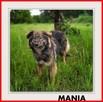 MANIA,16kg,średnia, młoda,łagodna, towarzyska sterylizow.sunia