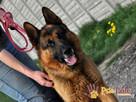 BARRY-fantastyczny pies z kiepską przeszłością-szukamy DOMU - 5