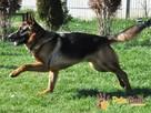 BARRY-fantastyczny pies z kiepską przeszłością-szukamy DOMU - 15