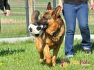 BARRY-fantastyczny pies z kiepską przeszłością-szukamy DOMU - 12