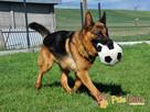 BARRY-fantastyczny pies z kiepską przeszłością-szukamy DOMU - 13