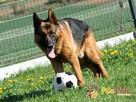 BARRY-fantastyczny pies z kiepską przeszłością-szukamy DOMU - 1