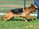 BARRY-fantastyczny pies z kiepską przeszłością-szukamy DOMU - 8