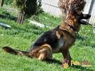 BARRY-fantastyczny pies z kiepską przeszłością-szukamy DOMU - 14
