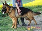 BARRY-fantastyczny pies z kiepską przeszłością-szukamy DOMU - 6