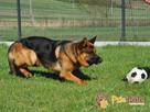 BARRY-fantastyczny pies z kiepską przeszłością-szukamy DOMU - 10