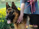 BARRY-fantastyczny pies z kiepską przeszłością-szukamy DOMU - 7