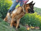 BARRY-fantastyczny pies z kiepską przeszłością-szukamy DOMU - 16