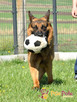 BARRY-fantastyczny pies z kiepską przeszłością-szukamy DOMU - 11