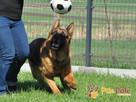 BARRY-fantastyczny pies z kiepską przeszłością-szukamy DOMU - 9